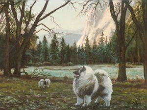 Yosemite Meadow Kees